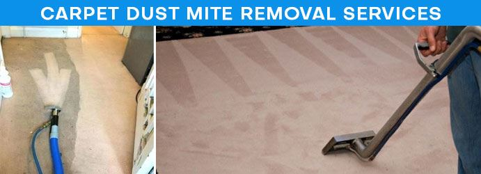 Carpet Dust Mite Removal Services