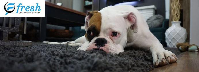 Pet Damaged Carpet Repair