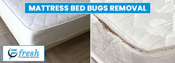 Mattress Bed Bugs Removal Yattalunga