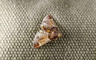Carpet Moth Treatment