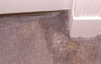 Carpet Mould Removal