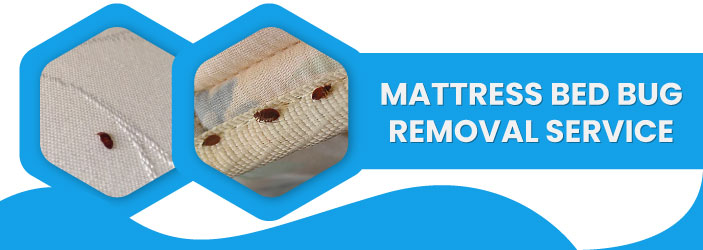 Mattress Bed Bug Removal Service