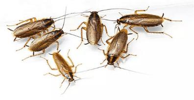 Pest Control Canberra