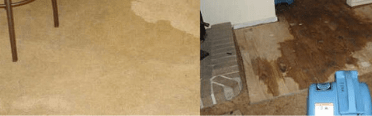 Carpet Water Damage Repair Service Perth