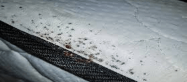 Mattress Bed Bug Removal Canberra
