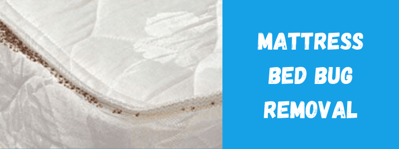 Mattress Bed Bug Removal